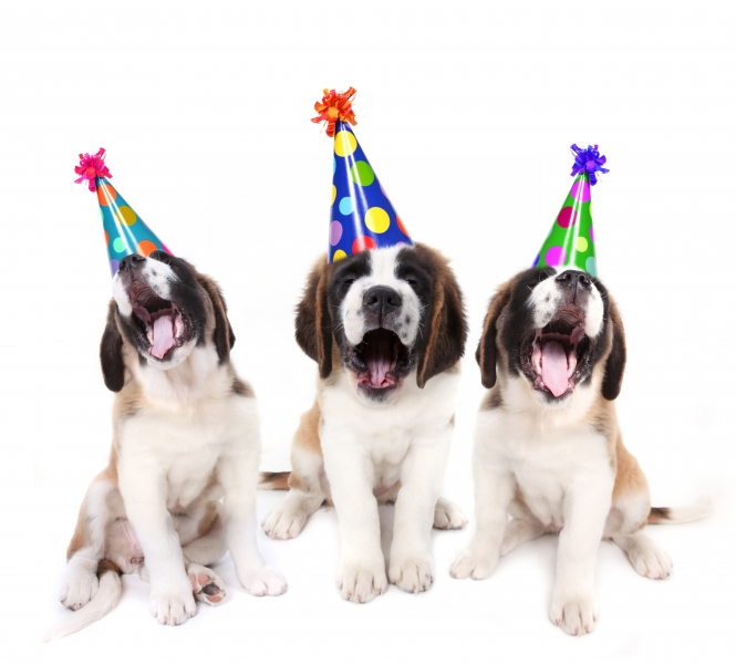 1411255-singing-saint-bernard-puppies-with-birthday-party-hats